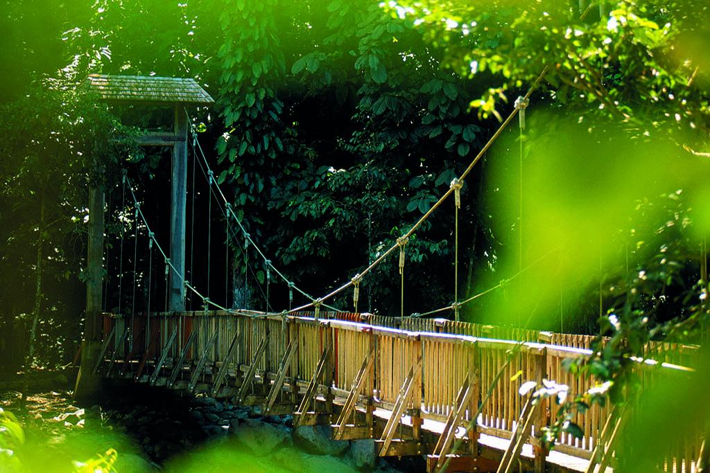 Le pont suspendu dans la forêt tropicale à Petit Bourg.
