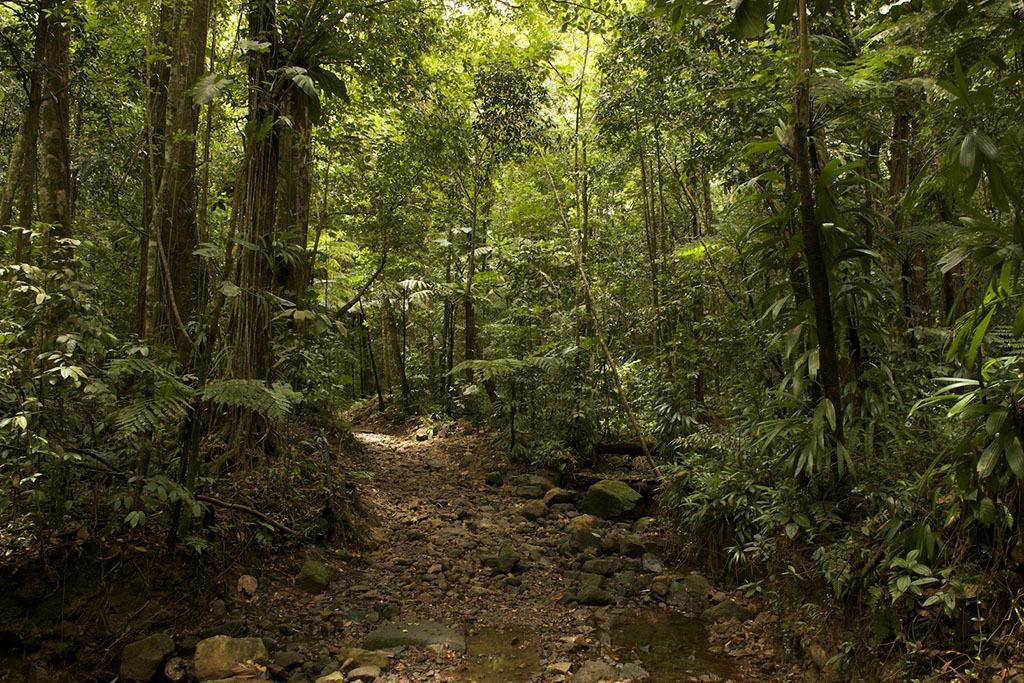 A jungle trail.