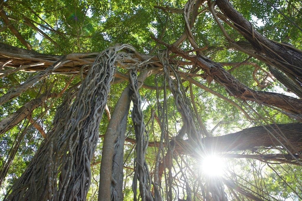 Trees near Plage de Grande Anse.